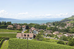 Houses amidst Vineyards Royalty Free Stock Images