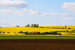 Houses and barns in a yellow flowers field Stock Photos