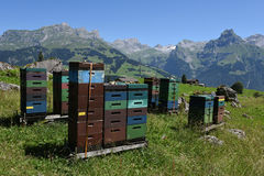 Houses for beekeeping and production of honey over Engelberg. On the Swiss alps stock photography