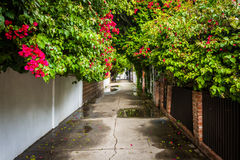 Houses and colorful trees along an alley in Venice Beach  Stock Images
