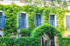 Houses Covered With Ivy Royalty Free Stock Image