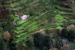Houses on cultivated terraced fields on the hill on the island of Madeira. Royalty Free Stock Image