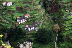 Houses on cultivated terraced fields on the hill on the island of Madeira. Royalty Free Stock Photo