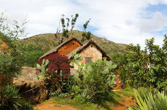 Houses in dried mud and luxuriant vegetation. Stock Images