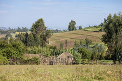 Houses and farms, Ethiopia. Houses and farms in the mountains of Ethiopia Royalty Free Stock Photo