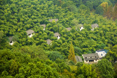 Houses in forest. A view of white houses in forests Royalty Free Stock Photo