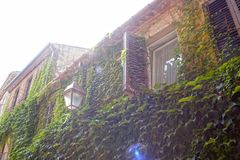 Houses full of ivy in a wall Stock Image
