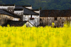Houses in goden yellow cole field Royalty Free Stock Photography