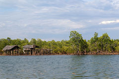 Houses in a mangrove swamp Stock Photography
