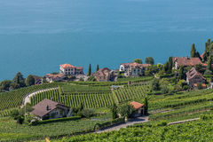 Vineyards near Lake Leman Royalty Free Stock Images