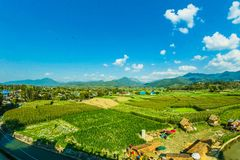 Houses Near the Rice Wheat Field Under the Clear Blue Skies Stock Photography