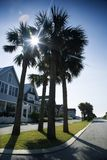 Houses on palm lined street. Houses on palm tree lined street on Bald Head Island, North Carolina Stock Photo