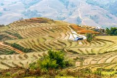 Houses between rice culture  in Sapa mountains Royalty Free Stock Images