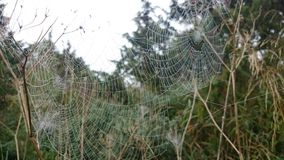 Houses of spiders. Set of webs, hidden in a grass Royalty Free Stock Photos