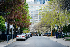 Houses and spring color on McGill Street, near Ryerson Universit Royalty Free Stock Photos