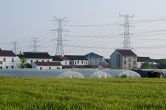 Houses and Wheat Fields in Pudong Shanghai Stock Image
