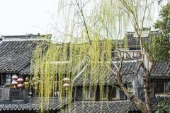 Housetop και πράσινη ιτιά στοκ εικόνα