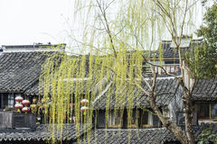 Housetop i zieleni wierzba obraz stock