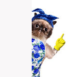 Housewife cat. Royalty Free Stock Photos