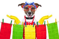 Housewife dog Stock Images