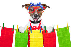 Housewife dog Royalty Free Stock Images