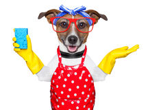Housewife dog Stock Image