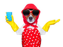 Housewife dog Stock Photography