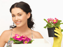 Housewife with flower in box and pot Stock Image