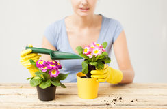 Housewife with flower in pot and gardening set Royalty Free Stock Photography