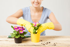 Housewife with flower in pot and gardening set Royalty Free Stock Images