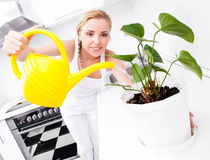 Housewife with flowers Stock Photography