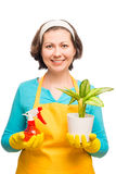 Housewife holding a flower in a pot Royalty Free Stock Images