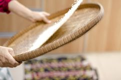 Housewife winnowing rice by using bamboo basketwork for separate between rice and rice husk. Selective focus shot Stock Images