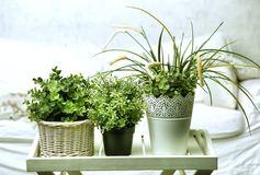 Housplants in vasi bianchi sui precedenti della camera da letto Immagine Stock Libera da Diritti