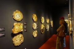 HOUSTON, DE V.S. - 12 JANUARI, 2017: De niet geïdentificeerde mensen die op a letten fosilized houten expositie in Nationaal Muse Royalty-vrije Stock Foto's