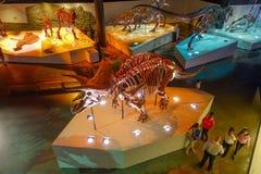 HOUSTON, DE V.S. - 12 JANUARI, 2017: Niet geïdentificeerde mensen die van de fossiele dinosaurussenexpositie rondwandelen in Nati Royalty-vrije Stock Foto's