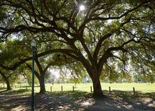 Houston Hermann-Park Marvin Taylor-Spur stockfoto