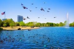 Houston Mc govern lake with spring water stock photos