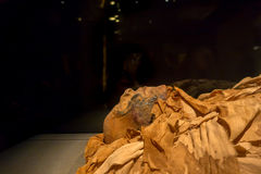 HOUSTON, USA - JANUARY 12, 2017: Amazing mummies wrapped with some rags of the Ancient Egypt in National Museum of. Natural Science in Orlando Houston in USA royalty free stock photography