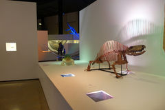 HOUSTON, USA - JANUARY 12, 2017: Fossil of dinosaur stegosaurus exposition in National Museum of Natural Science in. Orlando Houston in USA, in a black royalty free stock photos