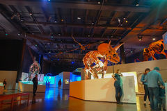 HOUSTON, USA - JANUARY 12, 2017: Fossil of dinosaur triceratops exposition in National Museum of Natural Science in. Orlando Houston in USA, in a black Royalty Free Stock Photos
