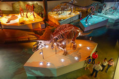 HOUSTON, usa - STYCZEŃ 12, 2017: Niezidentyfikowani ludzie chodzi wokoło skamieniała dinosaur ekspozycja w obywatelu Zdjęcia Royalty Free