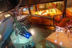 HOUSTON, usa - STYCZEŃ 12, 2017: Niezidentyfikowani ludzie chodzi wokoło skamieniała dinosaur ekspozycja w obywatelu Obrazy Royalty Free