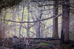 hout Royalty-vrije Stock Foto's