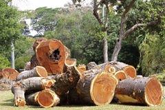 hout Stock Foto