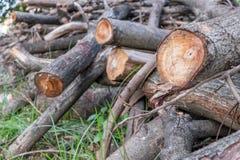 hout Stock Afbeeldingen