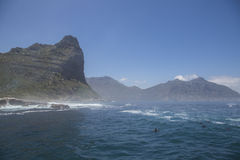 Hout Bay from the ocean. Cape Fur Seals swimming Stock Photo