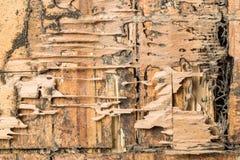 Hout dat door termieten wordt gegeten Stock Afbeelding