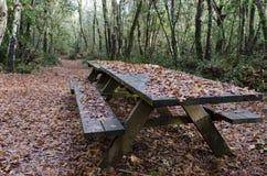 Hout in de herfst na de regen royalty-vrije stock afbeelding