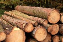 Hout - de houten industrie Royalty-vrije Stock Fotografie
